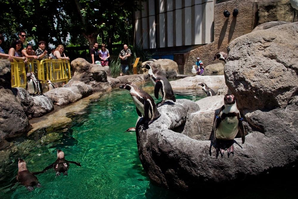 Pingüinos en el zoo de Barcelona / Igualdad Animal